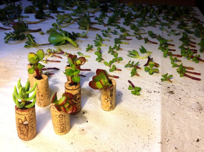 Cork Planter Production Line : LucidDesign