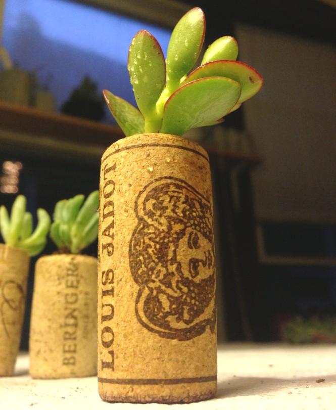Cork Planters : LucidDesign